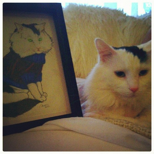 Piggy approves… I think? (photo by listentolesley) #catcommission #doodles  (Taken with Instagram)