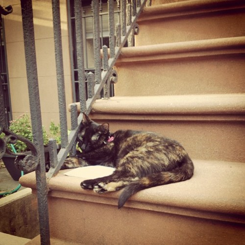 Stoop cat! #cat #ねこ (Taken with Instagram at Cobble Hill)