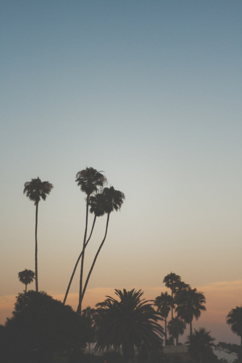 Palm Trees Tumblr Vertical Perfect Summer Landscape California Beach Intended