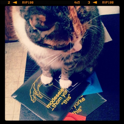 New in vinyls! Bella approved.