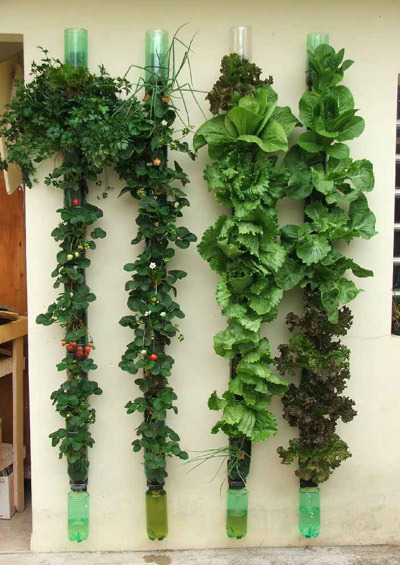 "lickystickypickywe:  The ""how to page"" to this alternative vegetable garden (hidroponia) is purely pictures so easy to follow. Just click a few times where it says ""click aquí"". Quite brilliant if you ask me."