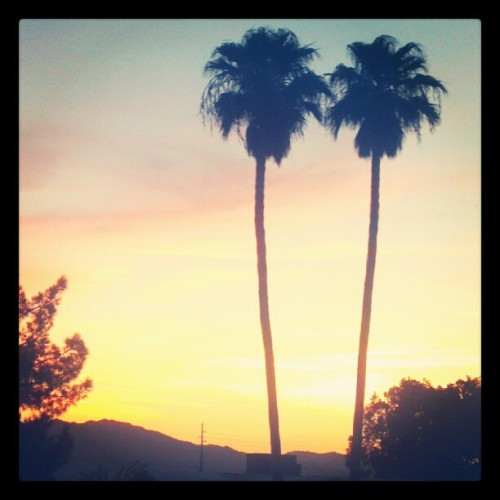 #palmtrees #arizona #sunset #love #lakehavasu #epic #@xxricochetxx #chillin (Taken with Instagram)