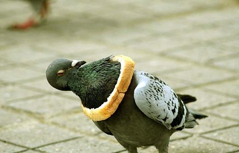 we've got do something about these inbread pigeons