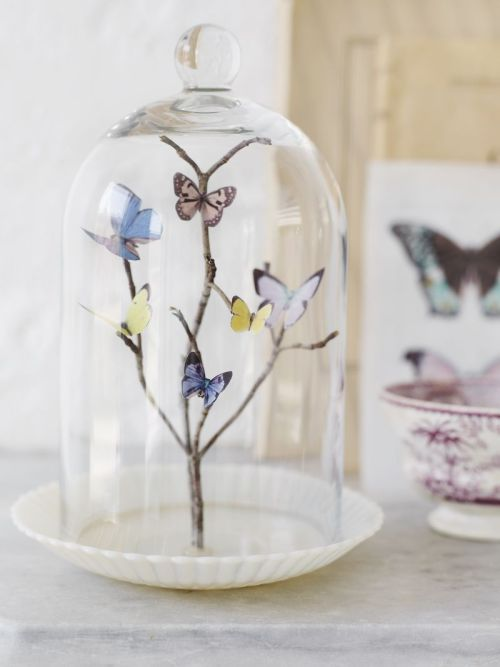 dulceetdecorus:  DIY Butterfly Dome