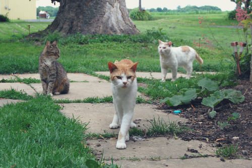 "DSC_5439-edit on Flickr.The cat in the middle is called ""Adventure Time"". Yeah, we named a cat after a TV show."