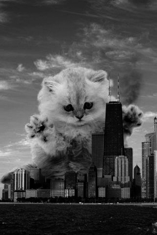 The cat that ate Chicago.