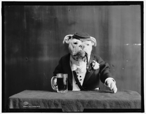 laughingsquid:  Bulldogs in Fancy Dress, 1905  PEOPLE WERE DRESSING UP BULLDOGS LONG BEFORE THE INTERNET.