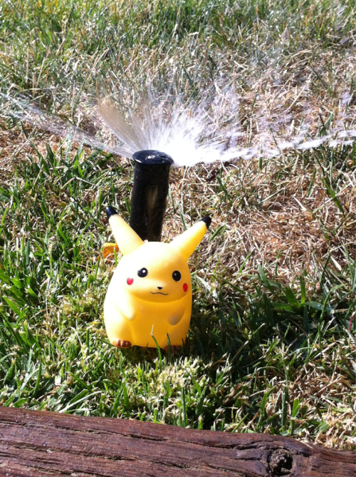 Playing in the sprinklers!