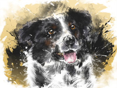 In a Border Collie's Eyes  Commissioned Work: Client requested to draw her adorable border collie. I'm very thankful for getting an opportunity to do so and it also made me discover that I can be decent in drawing lovely pets. Hope you guys like it!  Connect with me @:WebsiteDeviant ArtShadownessFacebookTwitterBehance