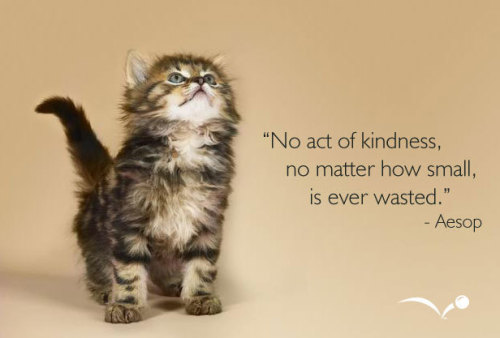 No act of kindness, no matter how small, is ever wasted. ~Aesop