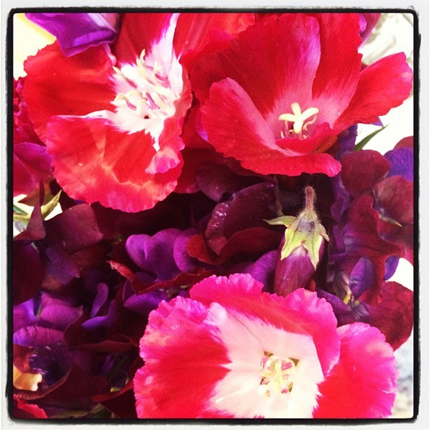 Sweet Peas stinking up my office…in the best way possible. 🌺 #flowers #smelly #purple #pink #fresh (Taken with Instagram at Portland Farmers Market at Shemanski Park)