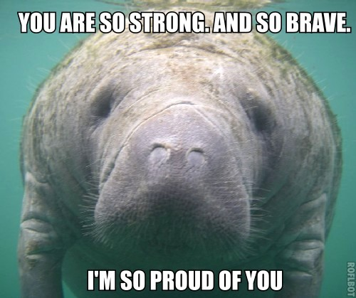 h0peful-recovery:  fuckbodyhate:  gobeautiful:  encouraging manatee might be the greatest thing to ever happen to the internet  i 100% agree^  MANATEES FOR LIFE