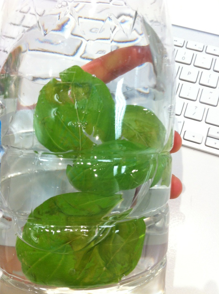 basil in my water bottle today…tastes fresssssh x