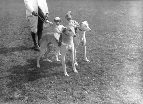 Greyhounds with stuffed and sprung model monkeys strapped to their backs before a hurdle race at Wellinborough. (Photo by E. Bacon). 21st April 1928