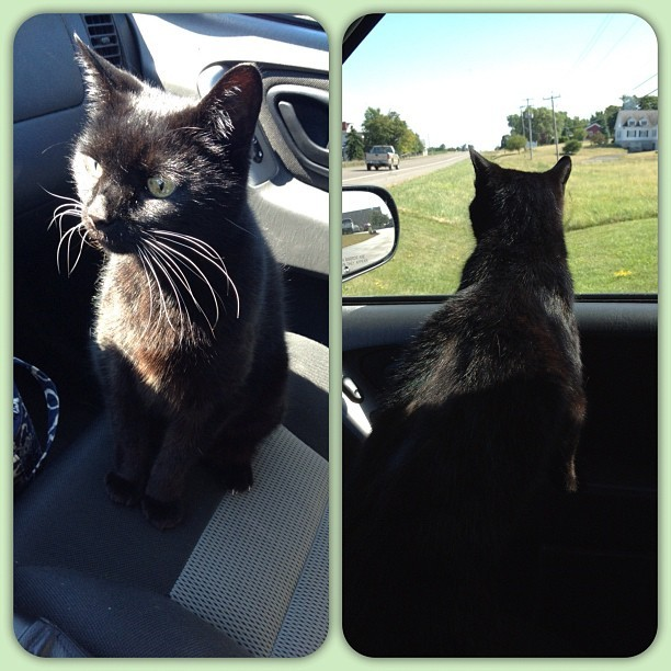 Midnight enjoying the ride on her trip to the vet today!  (Taken with Instagram)