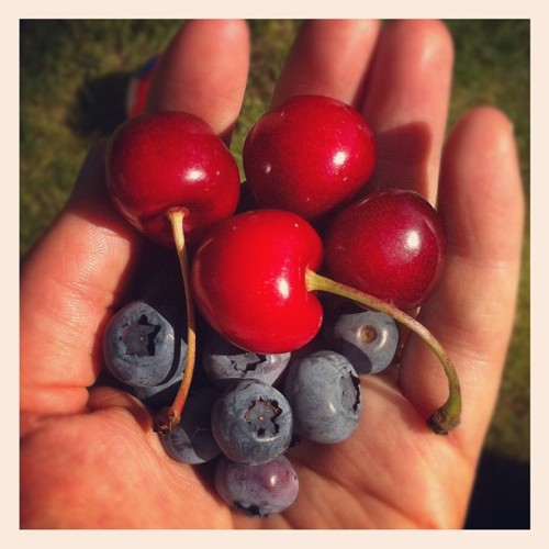 More goodies from our yard #SoLucky (Taken with Instagram)