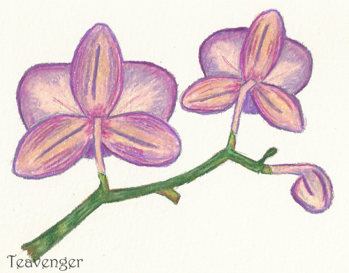 I felt like drawing tonight, so enjoy this colorful orchid sketch!