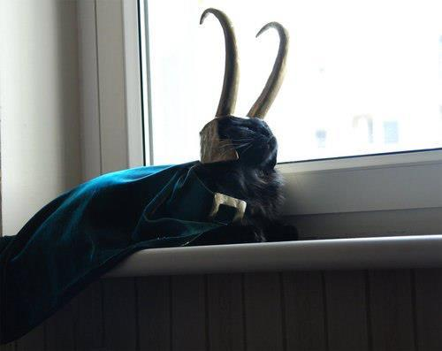 zaikira4world:  superwholockianlady:  jillypooh:  sweet-henrietta:  I am Lokitty, of Catgard, and I am burdened with glorious purrrpose.  This windowsill pleases me.    YOU GIVE UP THIS CATNIP DREAM! YOU COME HOME!  AND HE NEVER KNEW THAT HE WAS ADOPTED?!