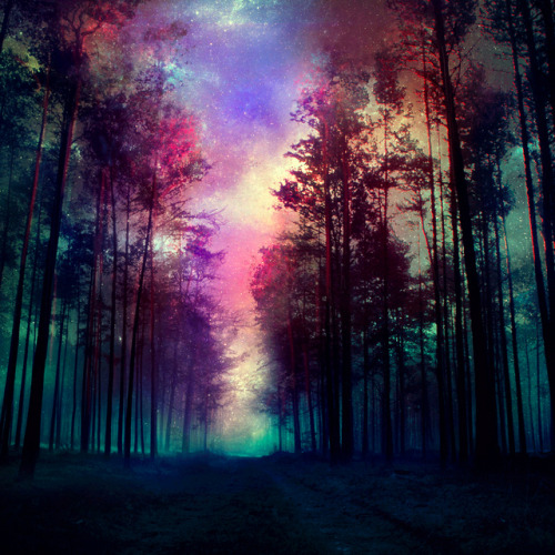mykindafairytalee:  magical forest by *kokoszkaa