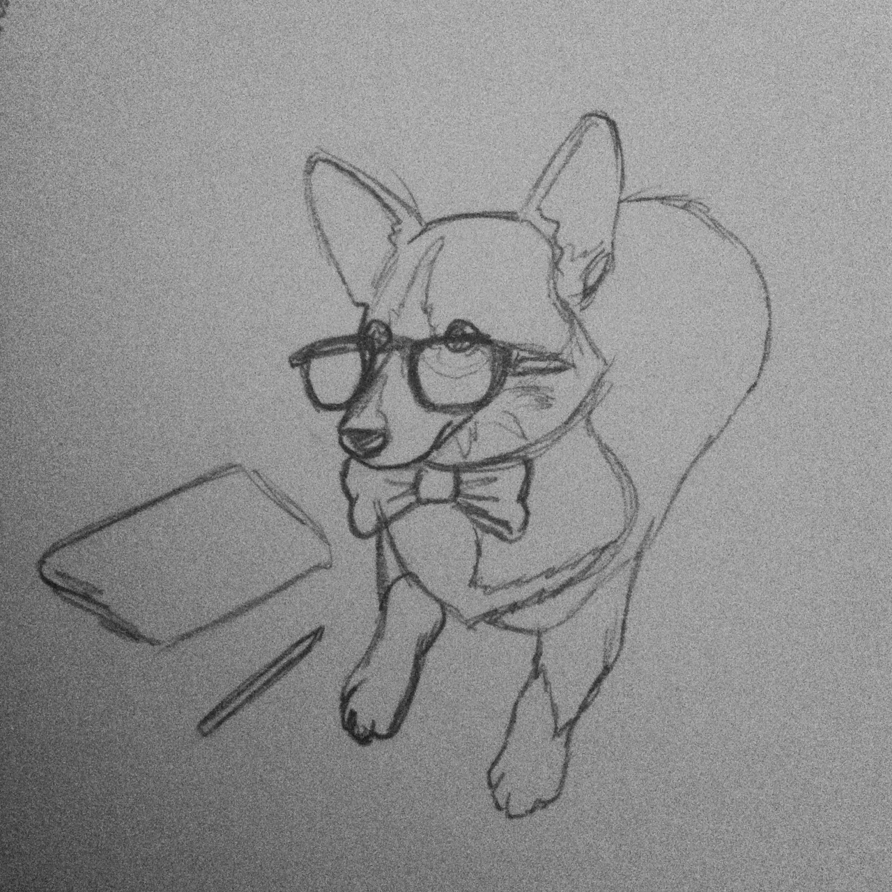 Corgi of the day!  Smart corgi is smart