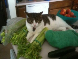 """This is my fucking celery, alright? MINE"" From: getoutoftherecat"