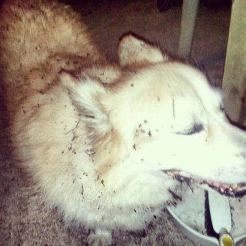 thirdworldlungs:  I have no idea what happened to my dog. (Taken with Instagram)  please fix snoopy :(
