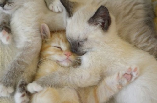 Sweet Dreams and Cuddles Wonderful Friends:) via:cutestpaw