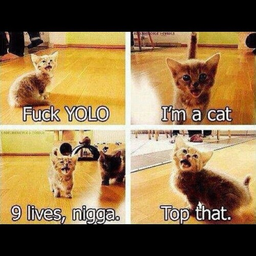 "miss-antichrist:  Hah #yolo #cat #9lives #funny  (Taken with Instagram)  I hate everything ""yolo"" stands for but I love it with cats. CATS!!!"