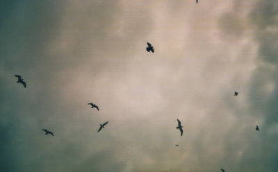 untitled by Hayley Dow on Flickr.