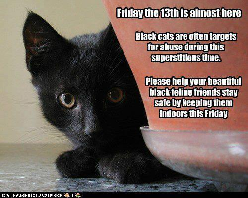 thegentledarkness:  Important!   Poor kitties…