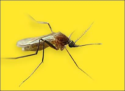 First EEE-infected mosquitoes of year detected in Mass.  Mosquitoes infected with Eastern equine encephalitis were collected earlier this week in Easton, and state officials warned that people are at risk of being infected through bites.