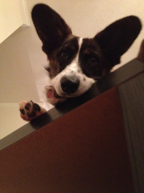 Oh hi! What are you doing down there?