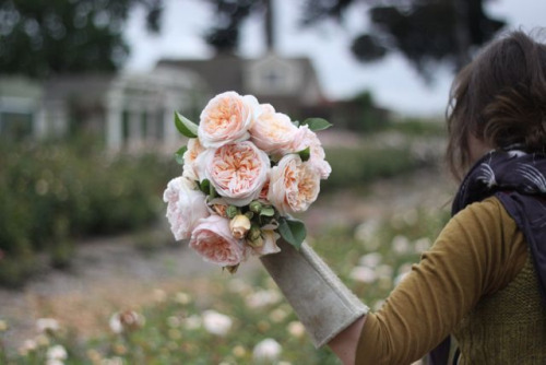 saltairandfarm:  (via flower school)