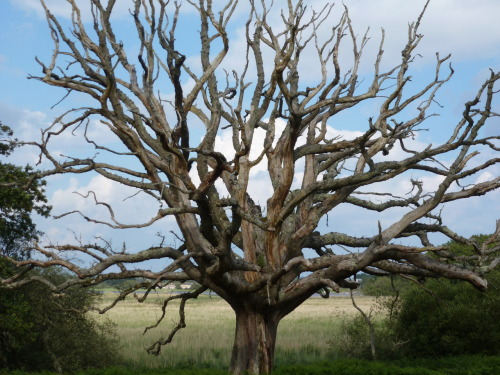 thelotussymphony:  The tree at the stone circle.