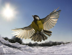 theanimalpages:  Frozen in Flight by Jamie Unwin