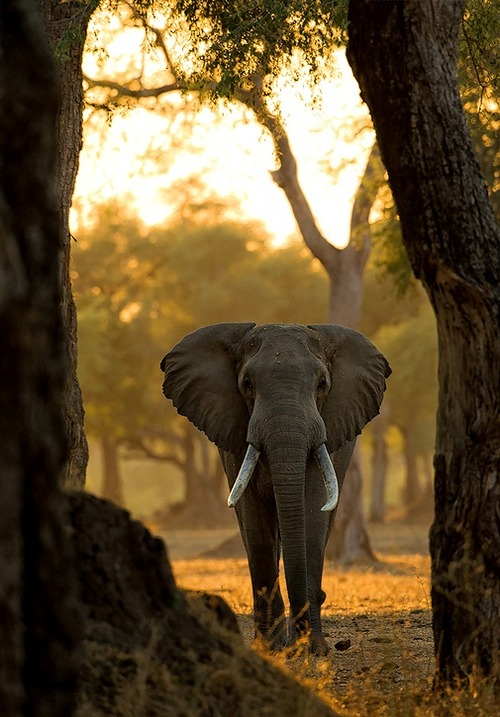 I am really sorry that i haven't post elephant pic's for a while…life is just hard you know.. one step at a time.