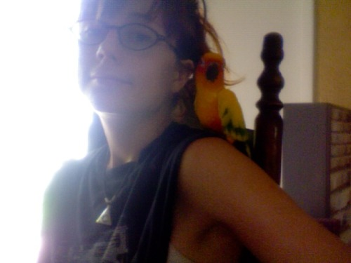 me and my sun conure Chili chillin. he's very adorable.   he bit me in the neck though; sun conure's have wicked beaks. luckily he didn't break my skin all the way or probably would've gotten my jugular.  i feel a guilt for keeping a bird as a pet, especially a sun conure, which is an endangered species. note that my family didn't buy Chili, he flew in to my yard about 10 years ago. try my best to give him a good life. he likes to eat bananas, carrots, and matzah.