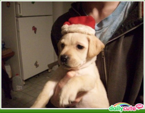 Calamity, the Christmas Pooch! http://bit.ly/PPQzQ5