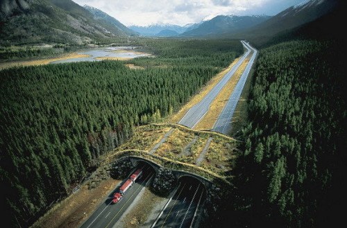 Check out this awesome bridge just for wildlife! It's in Banff National Park in Canada, because Canada knows how to do shit right. There's a whole gallery of rad highway overpasses for animals at The World Geography, from which I yoinked this pic. Imagine if we made a lot of these! No more road kill, ever! Animals could hold parties on them, or stand there and strategically poop on cars! I can't wait, it's gonna be AWESOME!