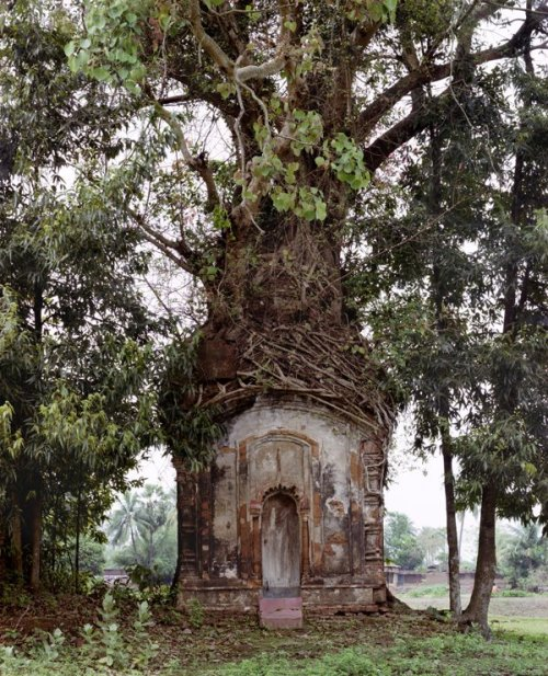 basava:  Banyan Tree and 16th Century Terracotta Temple, Attpur, West Bengal, India (1998) photo © Laura McPhee