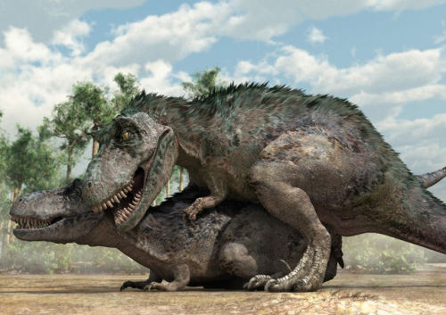 minusmanhattan:  New illustrations depict how researchers believe dinosaurs mated. Click here for more of these hilarious renderings.   I think we've all learned something here.  Previously: All we need to do is find some copulating fossils like these turtles and we'll know if we're right!