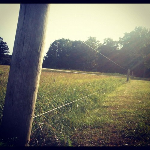 Amish fence (Taken with Instagram)