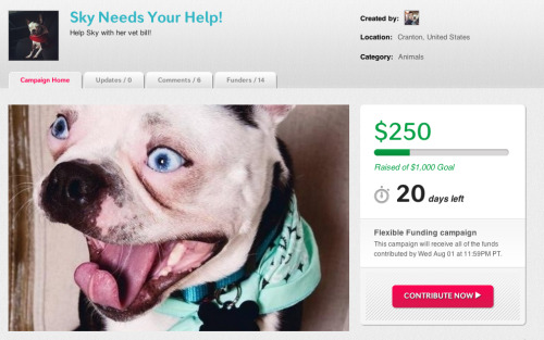 fuckyeahbostonterriers:  My baby blue eyed pup needs a tumor removed. Any help with spreading this link would be verygratefulto our family. http://www.indiegogo.com/skysmedicalbill?a=851697