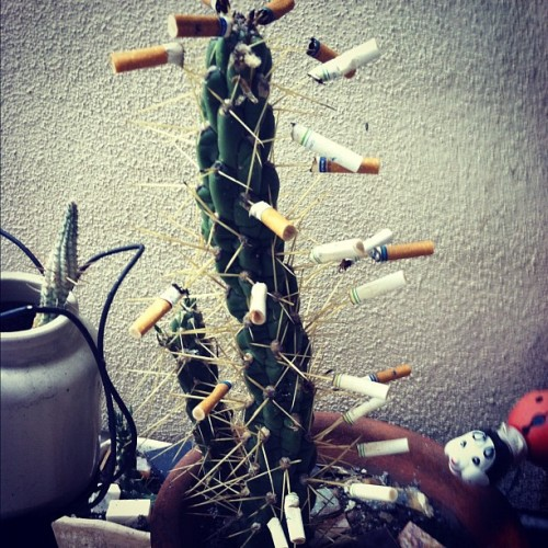 #smoke #cactus #plant (Taken with Instagram)