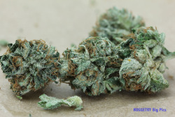 weedporndaily:  Master Bubba from California Patient's Association