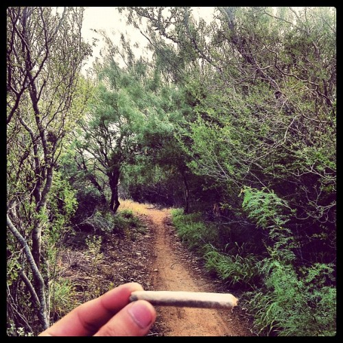 bloodhoundsonmytrail:  Earlier today #joint #cannabis #strains #nature (Taken with Instagram)