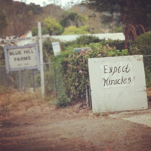 . @mizchavez + miracles . #expectmiracles #expectamiracle #sign #ojai (Taken with Instagram)