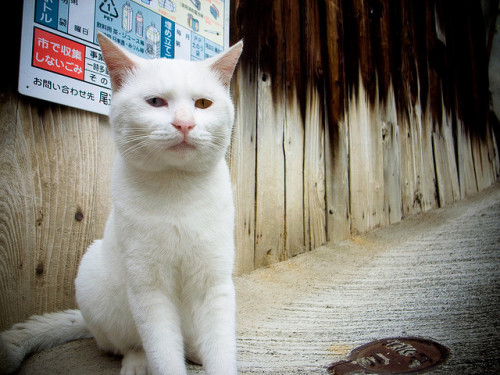 hiromitsu:  Onomichi stray cat trip - nervous (Hiroshima) by Marser on Flickr.