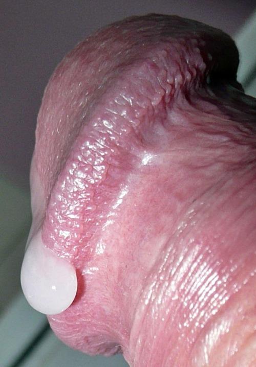 Drop of cum on cock head, close-up