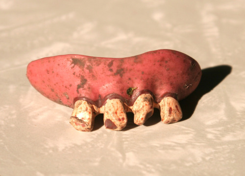 Inorganic Objects Discovered in the Garden: costume fake teeth.